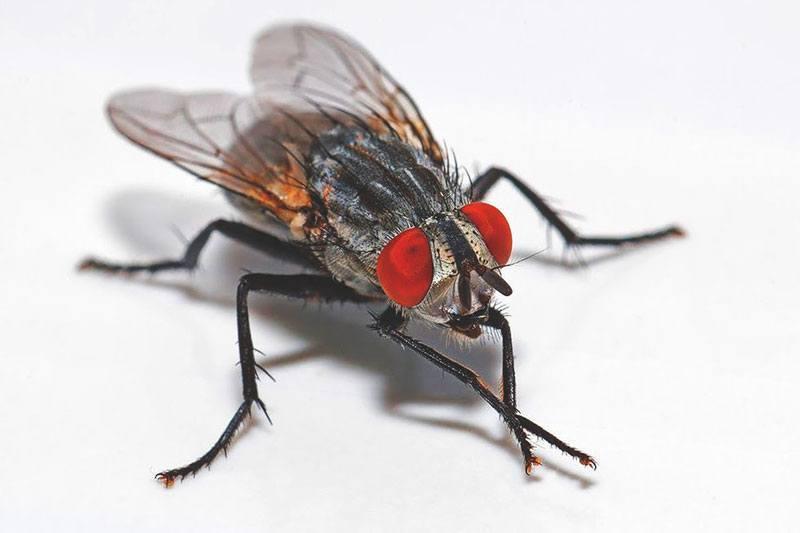 donde-viven-las-moscas